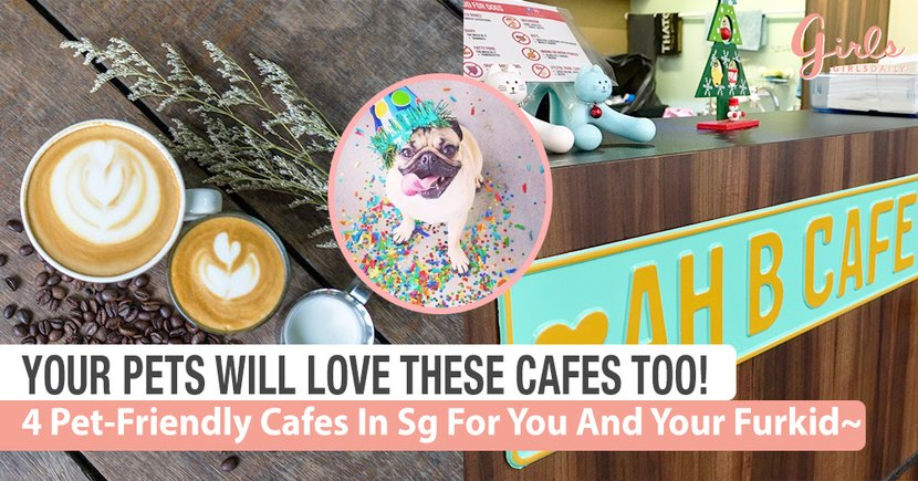 4 Pet-Friendly Cafes in Singapore That You And Your Pet Will Love