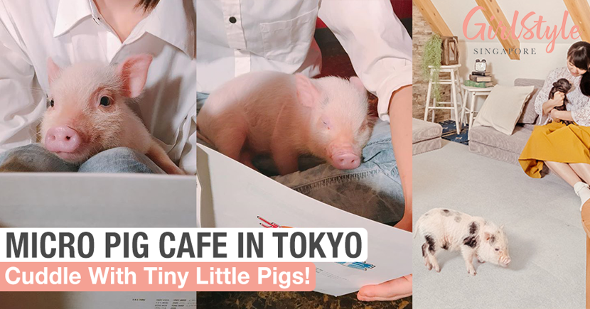 Cuddle With Tiny Little Pigs At This Micro Pig Cafe In Tokyo