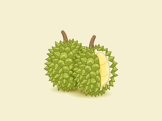 Durian illustration