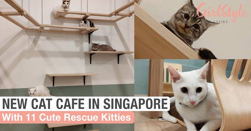 A New Cat Cafe Has Opened At The Rail Mall For You To Cuddle & Play With Cute Kitties