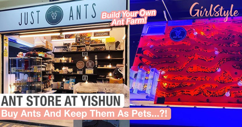 Just Ants: Singapore's First Ant-Keeping Shop With Over 30 Ant Species For You To Buy As Pets