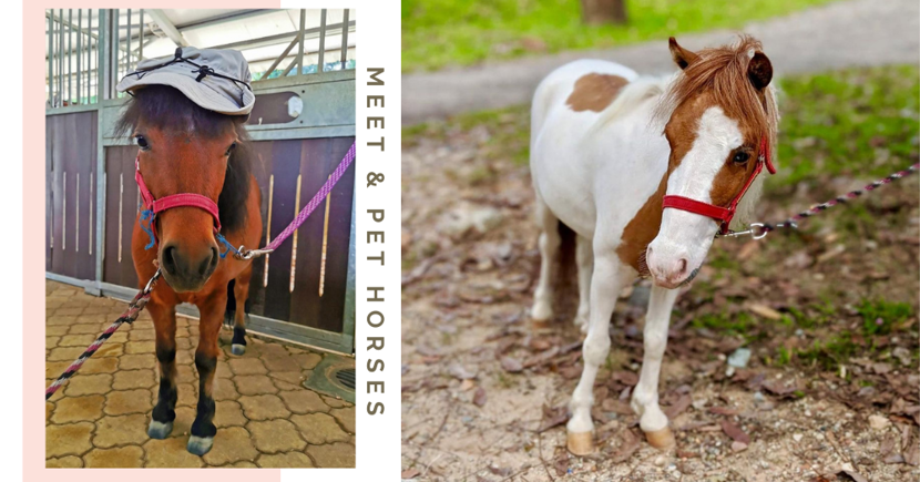 You Will Be Able Pet & Take Pics With 6 Miniature Therapy Horses At ION Orchard This December