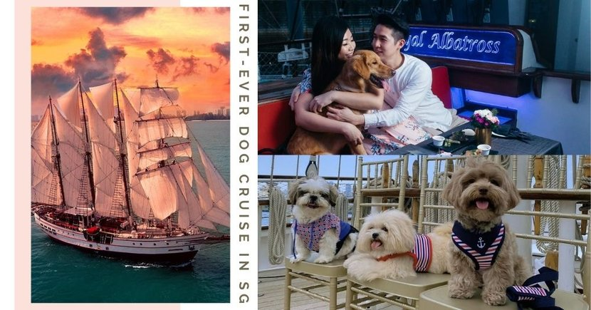 First-Ever Dog Cruise In Singapore Comes With 3-Course Meals For Both Hoomans & Furkids