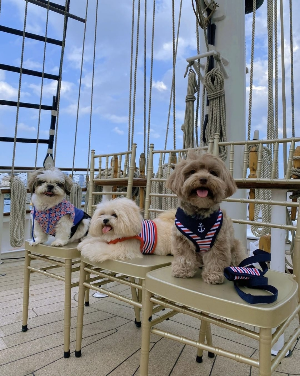 Dogs onboard Royal Albatross for dog cruise experience