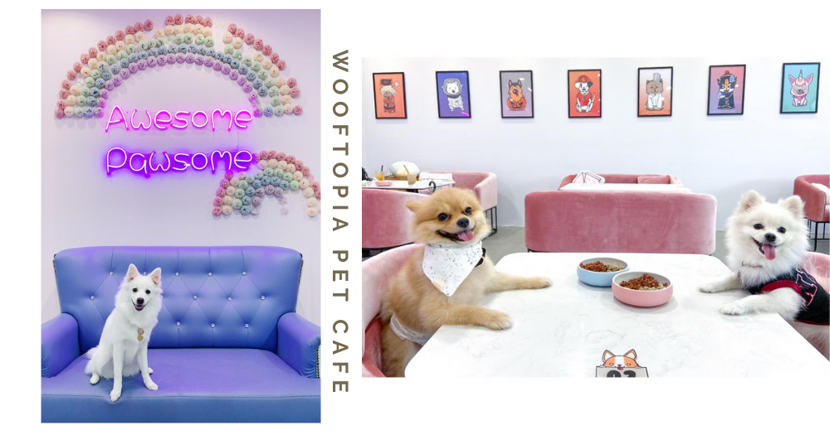 Wooftopia: Chic New Pet Cafe In Singapore With Pink Furniture & Meals For Both Dogs & Hoomans