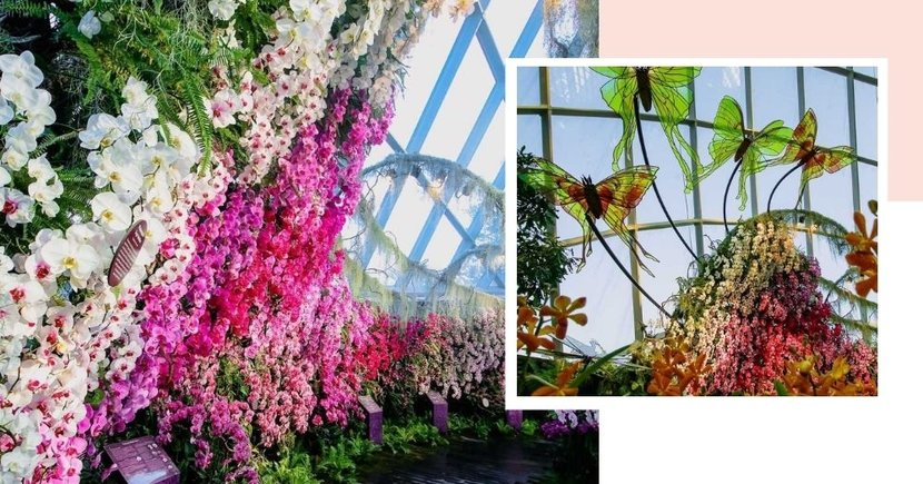 New Orchid Haven At GBTB's Cloud Forest Has Pink Blooms & Butterflies For Pretty Photo Ops