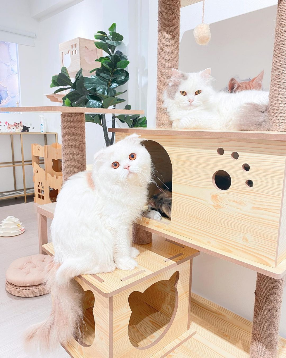 Paws Claws Cat Cafe Singapore